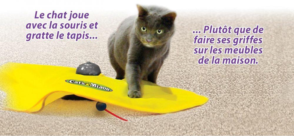 Un chat qui joue à CatsMiaou